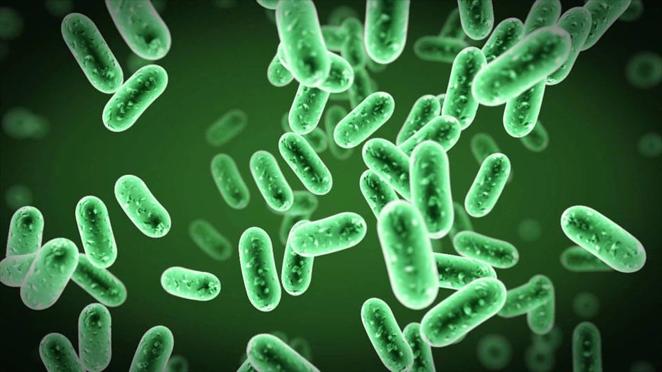 باکتری هایی که در فیلتر تصفیه آب یخچال و یا محفظه آب رشد می کنند با چشم قابل دیدن نیستند!