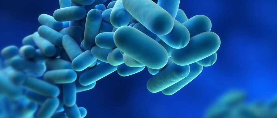 filter-bacteria